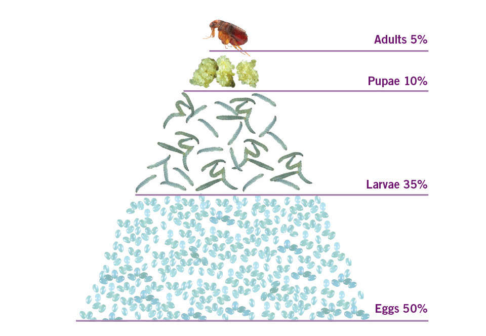 Image Result For Flea Control In Home